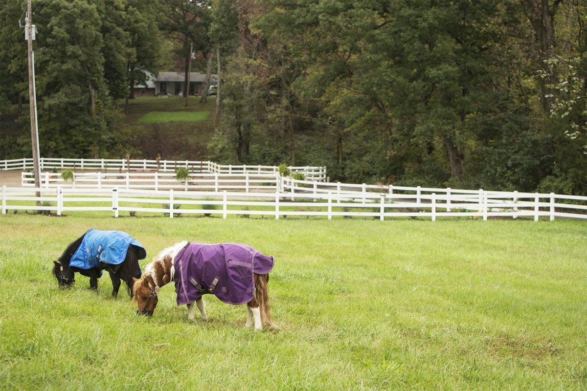 LITTLE HORSES, BIG REWARDS